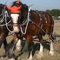 Clydesdale horse Wallpapers icon
