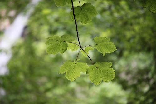 Felicità verdeggiante  di TheColor