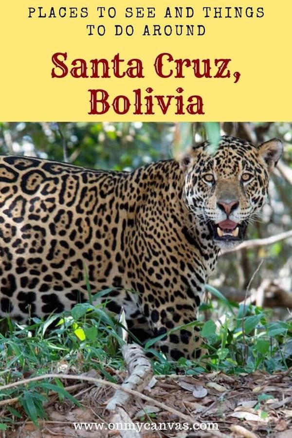 Santa Cruz, one of the richest city in Bolivia, is a gateway to the most unusual national parks of #Bolivia. While narrating the political and economical importance of the city, I disclose the best things to do in Santa Cruz Bolivia. (think jaguars). #travelguide #southamerica #solotravel #backpackingbolivia #samaipata #amboro #jaguars #sanmiguelitoranch#experiencebolivia #santacruz #boliviaculture #boliviapolitics #destinationguide #santacruzbolivia #boliviancities