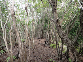 密集した木々の間を進む