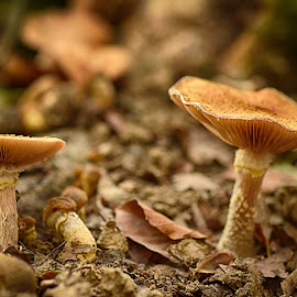 In The Forest by Marco Bertamé - Nature Up Close Mushrooms & Fungi ( forest, fall, autumn, shroom, two, mushroom, pair,  )