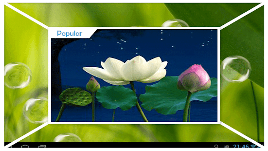 Water Lily Wallpaper - náhled
