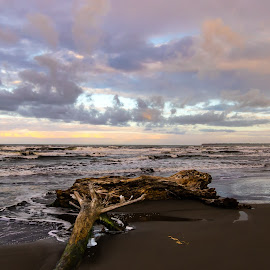 Cahuita Beachscape by Norma Brandsberg - Landscapes Beaches (  )