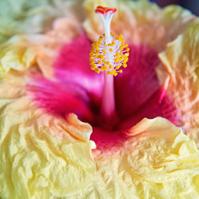 by Brook Kornegay - Flowers Single Flower (  )