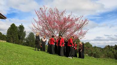 Photo: Cerejeira em flor