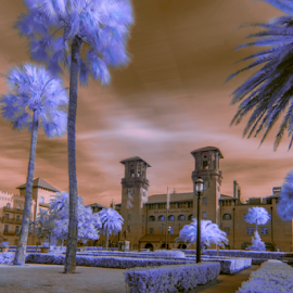 flourescent by David Ubach - City,  Street & Park  Historic Districts ( park, infrared, flourescent, city )