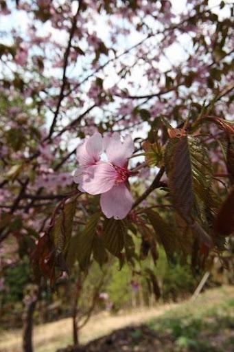 札幌 旭ヶ丘 公園 Sapporo Asahigaoka
