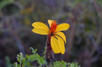 Photo: nice flowers here, too ...