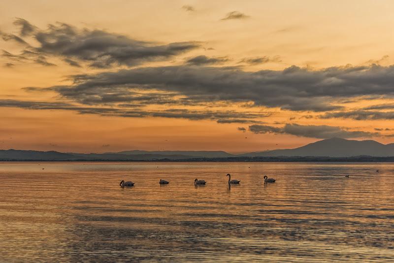 """""""passeggiata"""" al tramonto di christiandeledda"""