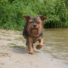Babygirl by Natasja and Martijn - Animals - Dogs Running ( running, waterscape, babygirl, playing, dog )
