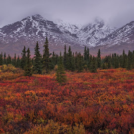Denali National Park by Ramsey Samara - Landscapes Mountains & Hills ( denali, alaska, weather, autumn, national parks )