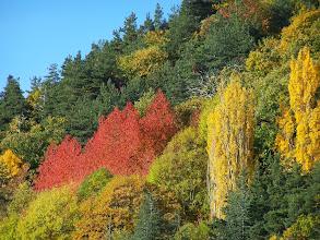 Photo: Près du hameau de Chapelèche à l'automne