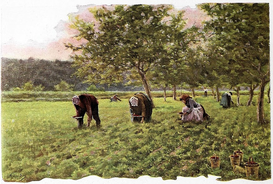 Andreu Solà i Vidal  (1863–1902), Las Fresas, source of the most terrible back and stomach problems.