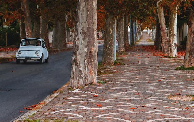Tra i colori dell'autunno di Alessio Proto