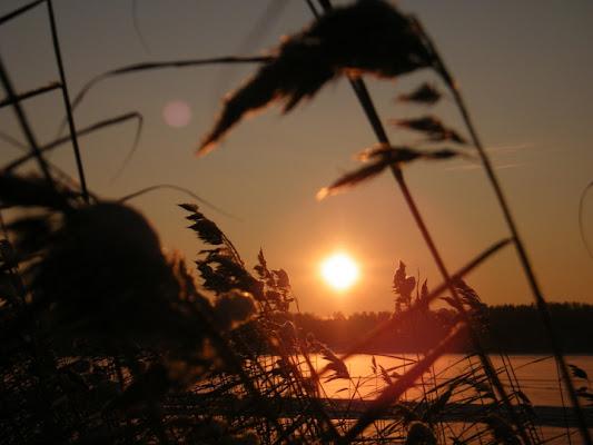 Caldo vento d'estate di Rox'N