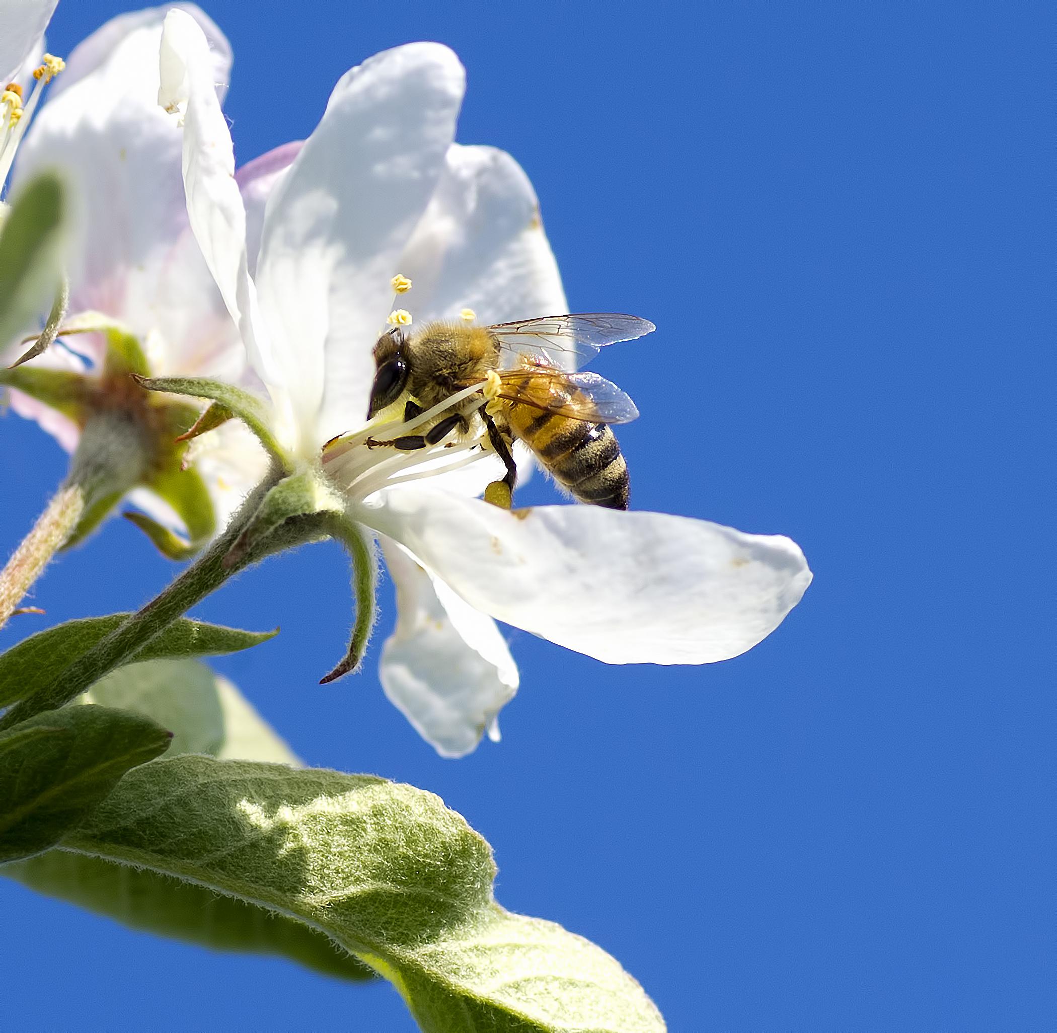 L'ape Maia! di manolina