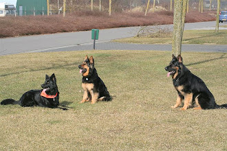 Photo: broer en 2 zussen: Angel, Luna & Boy