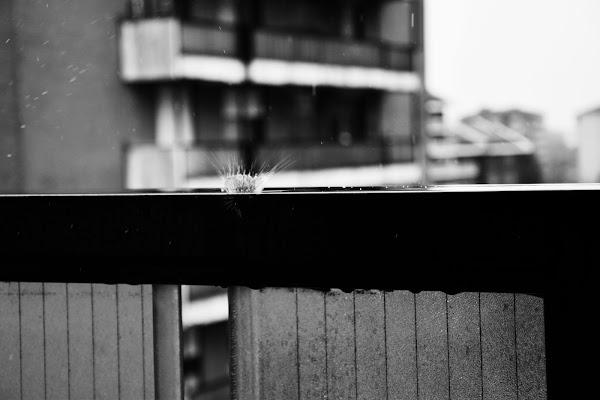 Schizzi di pioggia di DiegoCattel