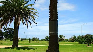 Photo: Metalic Wraps on the palms, St Kilda, Melbourne