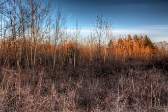 Photo: Sunset among the birch and weeds I can finally sense the days getting longer. Or maybe it just feels that way because today was unseasonably warm again.  #365Project curated by +Simon Kitcher