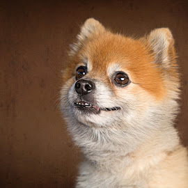 Smiling dog by Nathalie Rouquette - Animals - Dogs Portraits ( brown, cute, smile, dog, small )