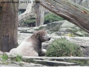 Photo: Knut in der Gesellschaft eines Tannenbaums in der Schlafkuhle ;-)