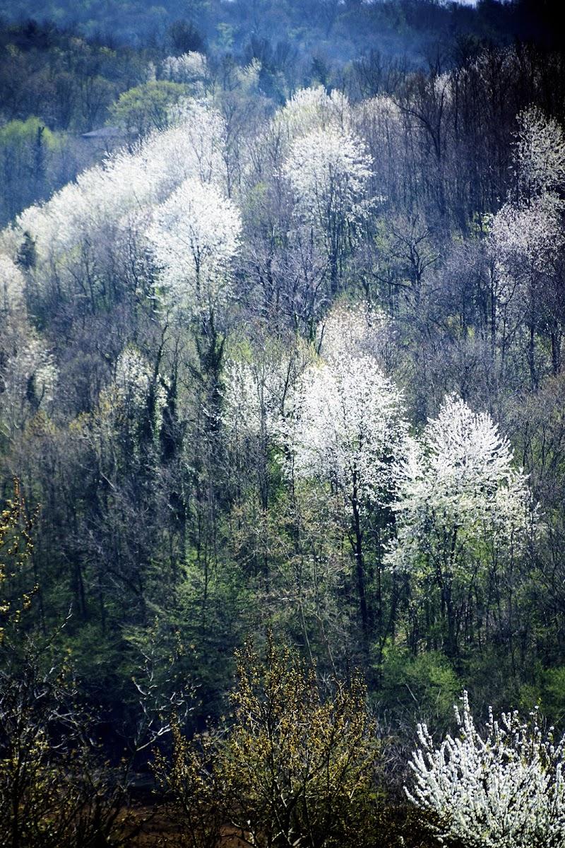 il tenue colore della primavera di defci