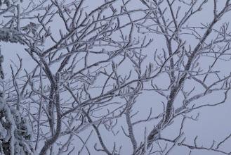 Photo: 霧氷