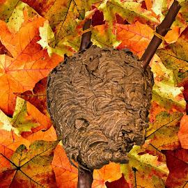 Hornet Nest by Will McNamee - Digital Art Things ( mcnamee2169@yahoo.com, dld3us@aol.com, gigart@aol.com, danielmcnamee@comcast.net, ronmead179@comcast.net, aundiram@msn.com,  )