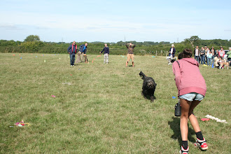 Photo: DogBasics Fun Day 2013 - Tilly Labradoodle making a run for it in the Fastest Toy and Treat Recall race.