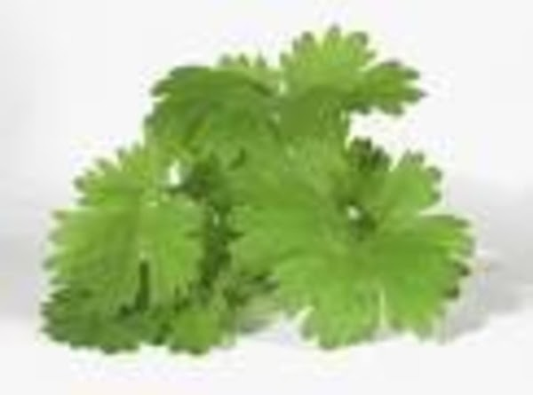 NOTES: When purchasing Cilantro (also called Chinese parsley), check for leaves that have a bright...