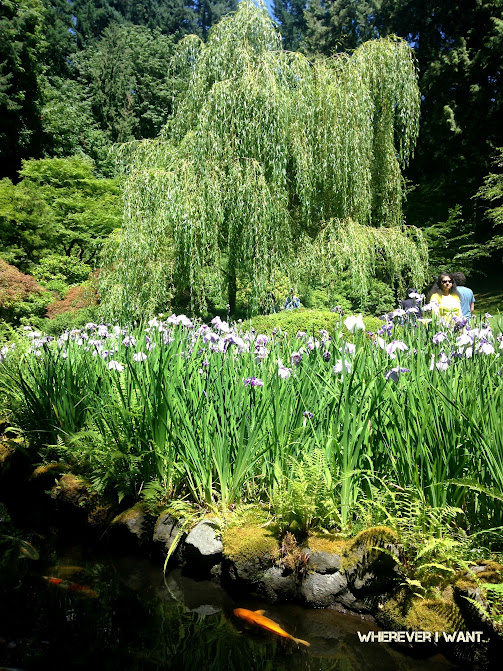 Washington Park | Portland Oregon | Guide to Washington Park | Where to do in Portland Oregon | What to do in Washington Park in Portland