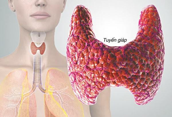 Suy giảm chức năng tuyến giáp là nguyên nhân dẫn tới huyết áp thấp