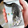 Cat Walks in Phone Cute Joke apk