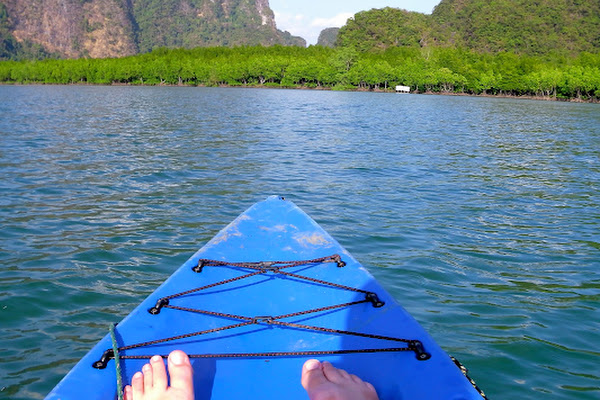 Head over the bay to the mangrove forest