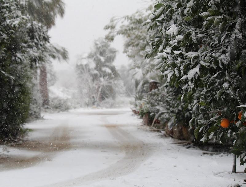 La Neve c'è di MarcoQ