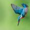 zibido oasi martin tuffo giugno 2015 (1 di 1)-3.jpg