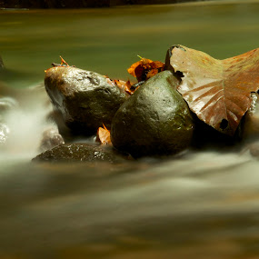 Saved by the rocks by Fredzex Foo - Nature Up Close Water ( stream, nature, dried, falls, rock, brown, forest, drift, leaf, leaves )