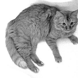 Harry Ala Tub by Howard Mattix - Animals - Cats Portraits ( animals, pets, casual, perspective, felines )