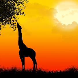 African Silhouette by Jasmine Curtis - Illustration Animals ( giraffe, silhouette, sunset, safari, africa, landscape, photoshop )