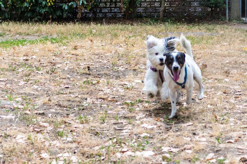 Cani che giocano di Filippo Ceragioli