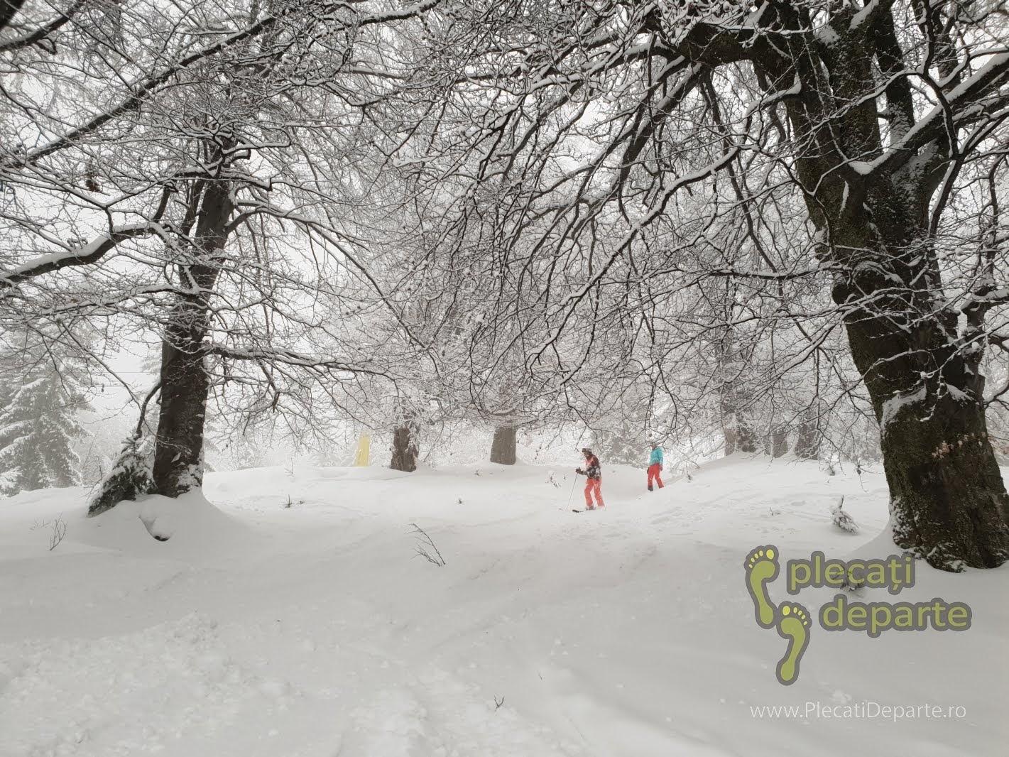Freeride in zapada mare, printre copaci, pe partia de ski din Parang in 2019