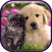 Cute Cat & Dog Live Wallpapers