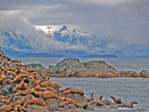 Photo: Sea Lion Rookery