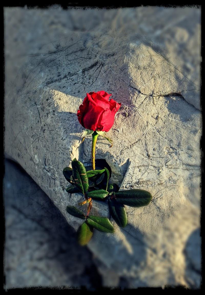 Per te, manifesto vivente dell'Amore che non muore. di Francesco Abate