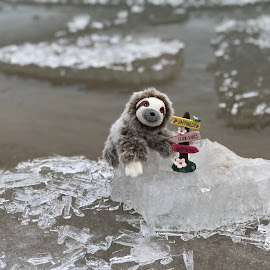 Good Vibes by Liana Lputyan - Instagram & Mobile iPhone ( goodvibes, happyanimal, happiness, coldweather, ice, toysphotography, chicago, frozenlake, toy, lakemichigan, slowloris )