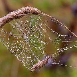 Beautiful Misty Web by Chrissie Barrow - Nature Up Close Webs ( water, cobweb, grass, web, bokeh, misty, closeup, droplets,  )