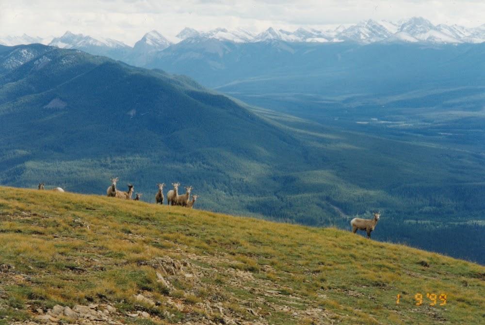 Willmore Wilderness Park, Alberta, Horseback Riding