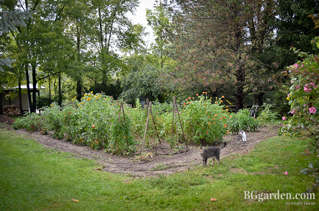 Photo: Next year I'm totally redesigning this garden.