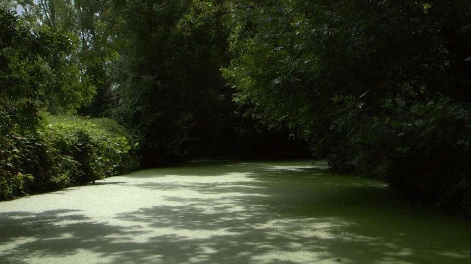 Marais Poitevin : marais mouillés